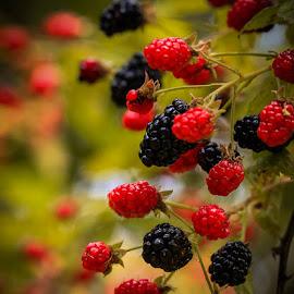 MMMMM Good by Keith-Lisa Bell Bell - Food & Drink Fruits & Vegetables ( wild, fruit, red, blackberries, black,  )