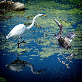 What kind of bird is this? by Sandy Scott - Artistic Objects Other Objects ( egret, water birds, art, bird meets art, nature, florida, statue, sculpture, birds, water, wading birds, humor, great egret, animals, lake, wildlife )