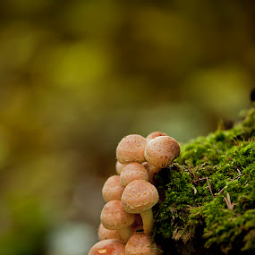 by Gašper Kamenšek - Nature Up Close Mushrooms & Fungi