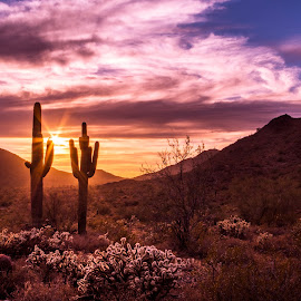 by Ken Mickel - Landscapes Deserts ( clouds, desert, hdr, plants, landscape, buckhorn cholla, buckeye, photography, nature, cacti, landscape/desert, sunsets, sunset, outdoors, arizona, cloudy, skyline regional park, cholla, saguaro, cactus )