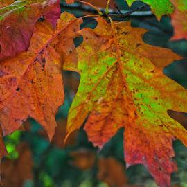 by Gerard Hildebrandt - Nature Up Close Leaves & Grasses (  )