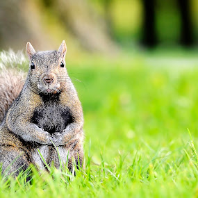 Hey by Fotugraphar Quazi - Animals Other ( wild life, squirrels, wall paper, landscape, animal )