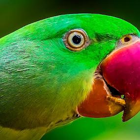 Breakfast Time by Ken Nicol - Animals Birds (  )