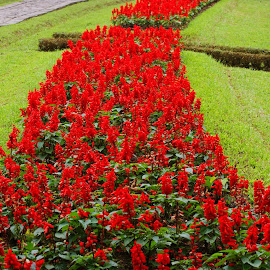 Flower Park by Mulawardi Sutanto - City,  Street & Park  City Parks ( park, travel, cipanas, flower, city )