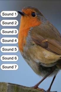 Bird Sounds for Kids - screenshot