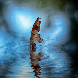 autumn leaf by Egon Zitter - Digital Art Abstract ( water, reflection, blue, autumn, fall, leaf )