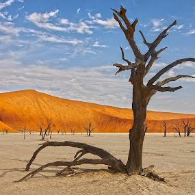 Ancient dead tree, Sossusvlei by Anthony Allen - Landscapes Travel ( dunes, dead trees, shifting sand, red sand, mud pan, namibia, deadvlei )