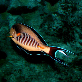swimming in color by Talitha Sydnei'a - Animals Fish