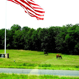 HORSES AND THE FLAG by Larry Moore - Animals Horses