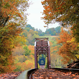 Looking For Fall by Wesley Nesbitt - Transportation Railway Tracks ( fall colors, fall, nature, metal, train tracks, wood )