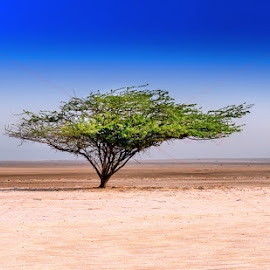 Tree of Life by Deon Warrington - Landscapes Deserts ( sand, sky, desert, tree, colors )