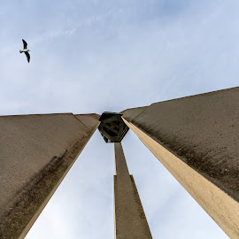gull above monument at FLW university by John J Draper - Buildings & Architecture Statues & Monuments