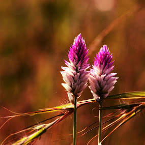 With you always by Swapnil Khare - Nature Up Close Leaves & Grasses