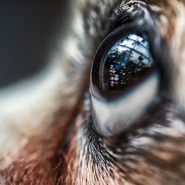 by Tran Ngoc Phuc Ngoctiendesign - Animals - Dogs Portraits