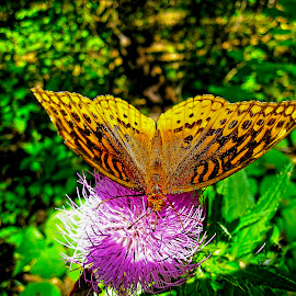 by Bill Phillips - Animals Insects & Spiders ( color, nature, butterfly, insect, nature up close,  )