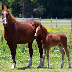 Mare & Colt by Marme Potts - Animals Horses