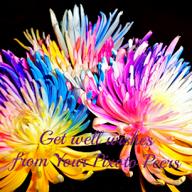 Get Well Wishes from Your Pixoto Peers by Cheryl Beaudoin - Typography Quotes & Sentences ( colorful, greeting, wishes, peers, pixoto, blessing, well, flowers, health,  )