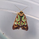 Green Blotched Moth