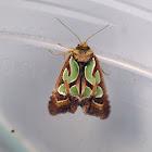 Green Blotched Moth