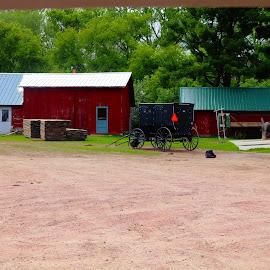 amish buggy by Jon Radtke - Transportation Other ( amish buggy )
