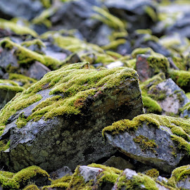 Mossy Rocks - 062113-4 by Twin Wranglers Baker - Nature Up Close Rock & Stone (  )