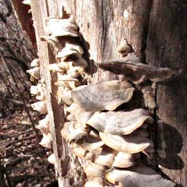by Dawn Price - Nature Up Close Mushrooms & Fungi