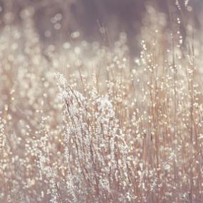 Sunlit Grass by Jill Beim - Nature Up Close Leaves & Grasses ( grasses, fall, nature up close, sunshine )