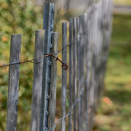 Fence  by Lorraine D.  Heaney - Artistic Objects Other Objects