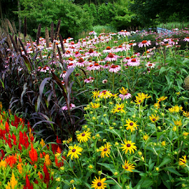 A Great Array by Nancy Bowen - Novices Only Flowers & Plants ( different, flowers, multicolored )