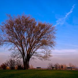 Plaines d'Abraham in old Quebec city at dusk! by Réjean Côté - City,  Street & Park  City Parks ( person, blue sky, tree, colorful, grass, green, eos 20d, 17-50 2.8 tamron, plaines d'abraham in old quebec city at dusk! )