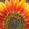 SAM_1025(4) Edit3crop3.png