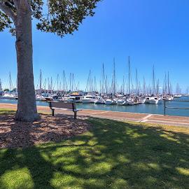 Wynnum-Manly Yacht Club by Dom Del - Novices Only Landscapes ( water, boats, yacht, yacht club, wynnum )