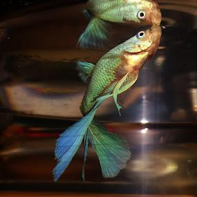 Mr Fish Showing off by Suzy Sutton - Uncategorized All Uncategorized