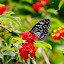 Butterfly effect by Sushant Ojha - Animals Insects & Spiders (  )