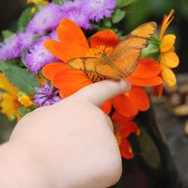 She landed on my finger! by Carla Turner Shannon - Babies & Children Hands & Feet (  )
