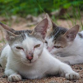 Kitty  by Swift Bala - Animals - Cats Playing