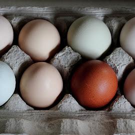A Dozen Eggs by Kansas Allen - Food & Drink Cooking & Baking ( canada, coop, poultry, far, hatching, rosebank, farm, eggs, food, chickens, baking, bc, maran, lillooet )