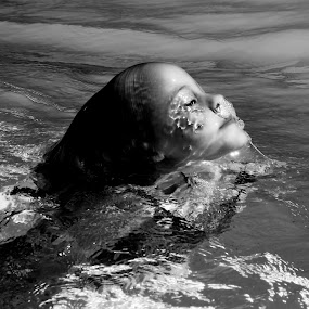 breaking water by Magdalena Wysoczanska - Babies & Children Child Portraits ( water, child, girl, life, innocent, serene,  )