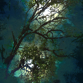 Moonlight by Edward Gold - Digital Art Things ( digital photography, blue sky, moonlight, nightscape, artistic, trees, decorative, digital art,  )