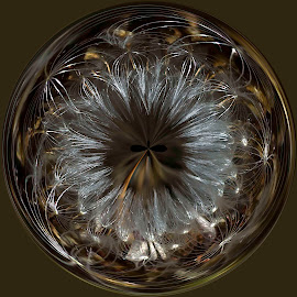 Dandelion Orb by Carol Chihara - Abstract Patterns ( flowers & plants, dandelion, orb art, weed in a globe, dandelion weed )