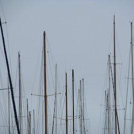 Mast muster by Kim Pauly - Novices Only Objects & Still Life ( abstract, melbourne, australia, masts, st kilda,  )