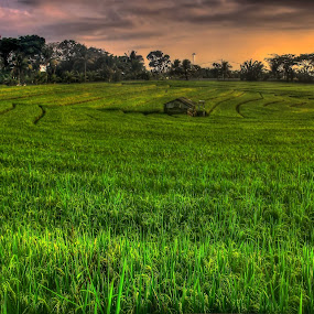 field pattern by I Gusti Putu Purnama Jaya - Landscapes Prairies, Meadows & Fields ( adhitz arch, biksudinata, tut bolank, agoes antara, yuditia mendra )