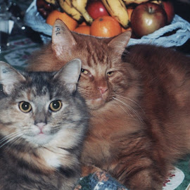 Brother & Sister by Sharon Leora Norris - Animals - Cats Portraits