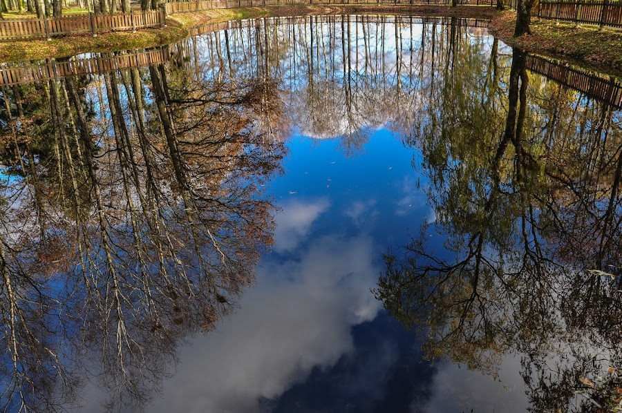 Reflection in the pond water by Irena Gedgaudiene - City,  Street & Park  City Parks ( water, nowember, reflection, park, fall, trees, sunny day, pond )