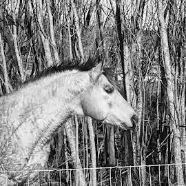 by Miranda DeBruhl - Animals Horses