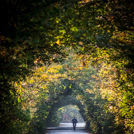 Autumn ride by Ovidiu Domsa - Sports & Fitness Cycling ( bike, tree, colorful, autumn, sport, autumn colors )