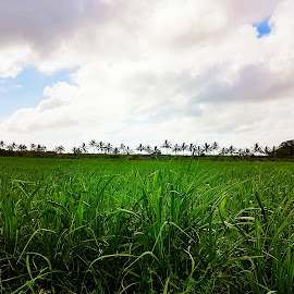Green as far as you can see by Hayley Moortele - Landscapes Prairies, Meadows & Fields ( #landscape, #sugarcanefield, #fields, #green, #horizon, #palmtrees )