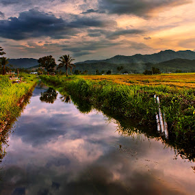 Padi field sunset by Macbrian Mun - Landscapes Prairies, Meadows & Fields ( field, clouds, mountains, reflection, waterscape, sunset, malaysia, landscape, sabah )