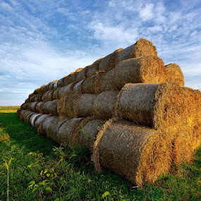 The field . by Mirek. Mirek. - Landscapes Prairies, Meadows & Fields