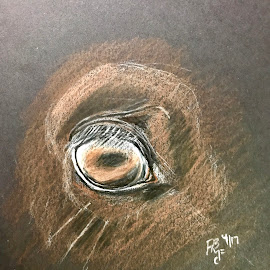 Horse's Eye by Anika McFarland - Drawing All Drawing ( colored pencil, horses eye, horse, drawing, eye )